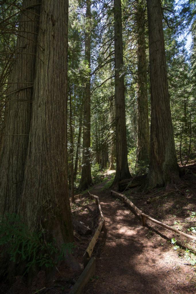Trail through Devoto Grove