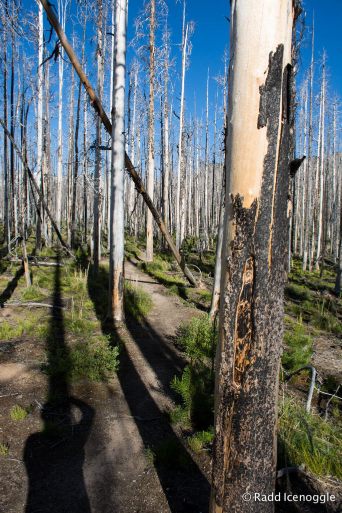 Trail weaving through the post-fire forest