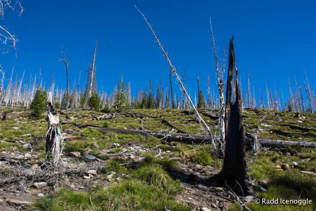 The remains of the Gash Creek Wildfire