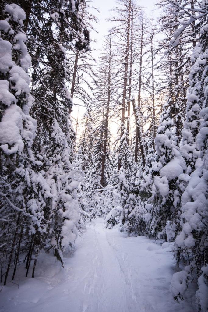 Bass Creek trail in winter
