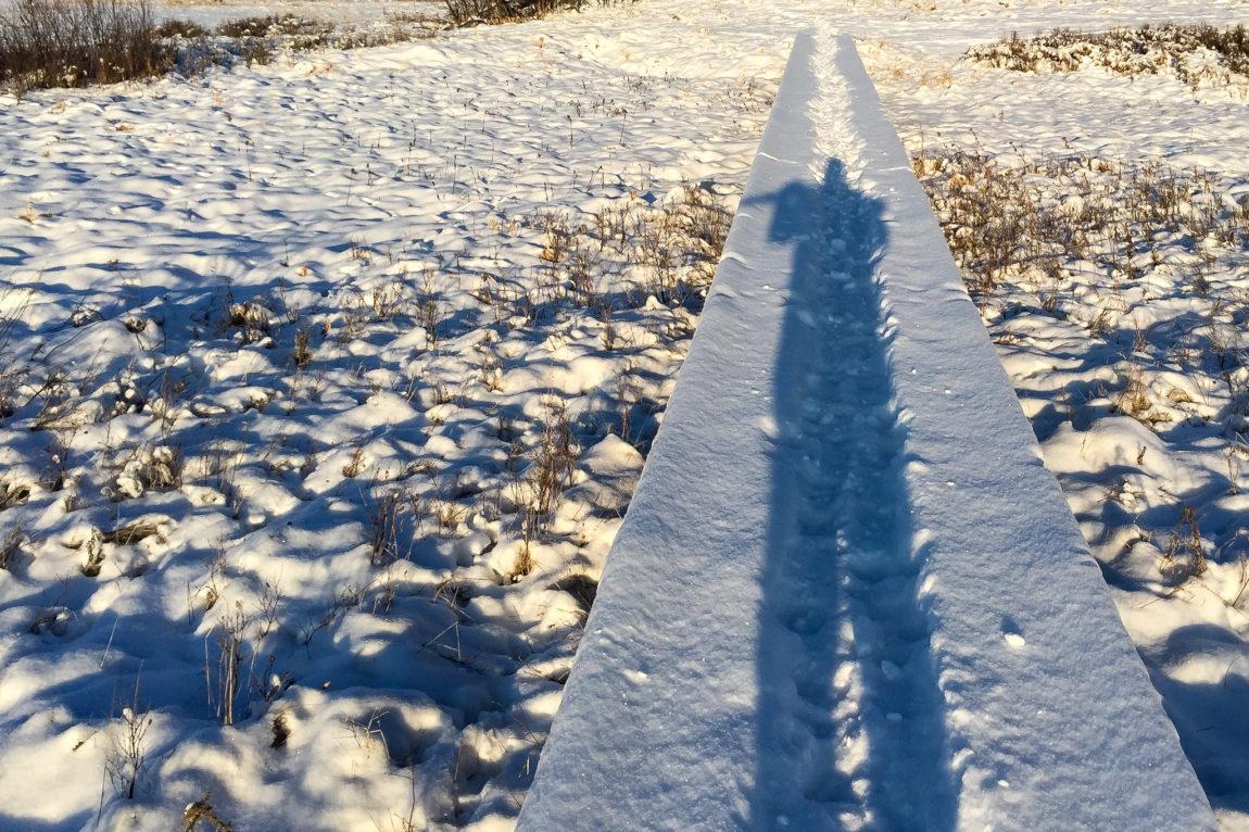 Long shadows of winter