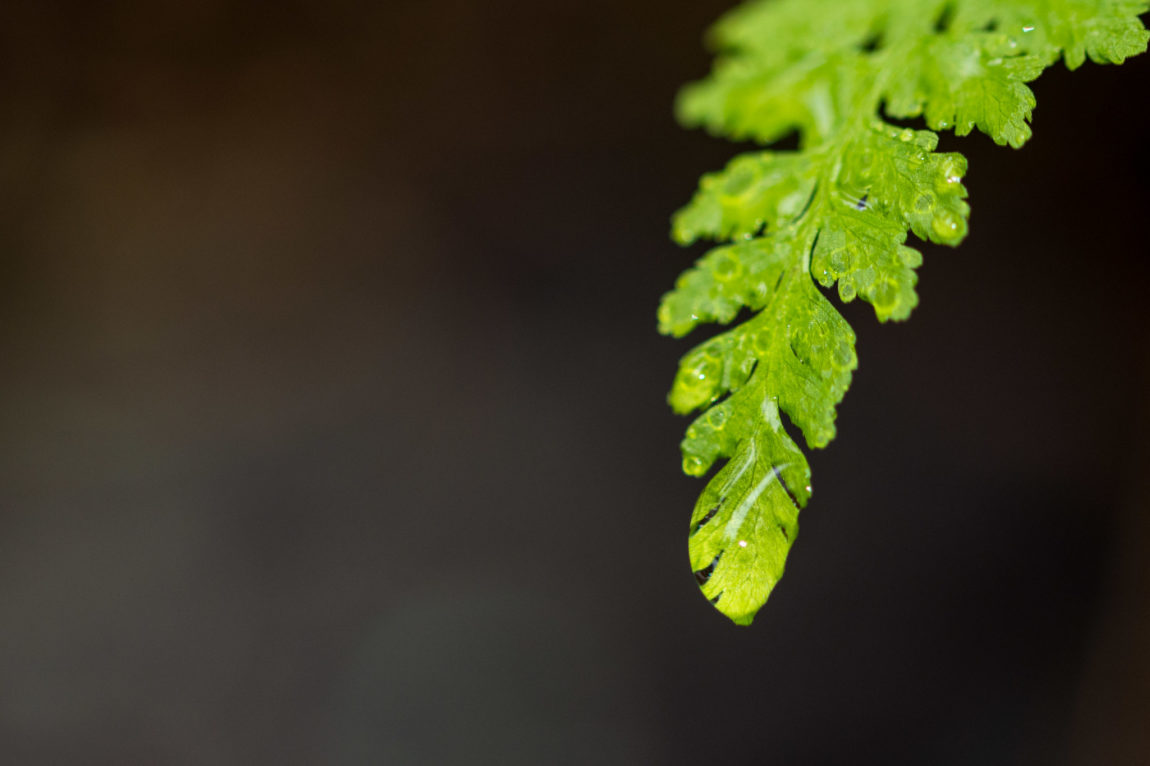 Rain and the fern