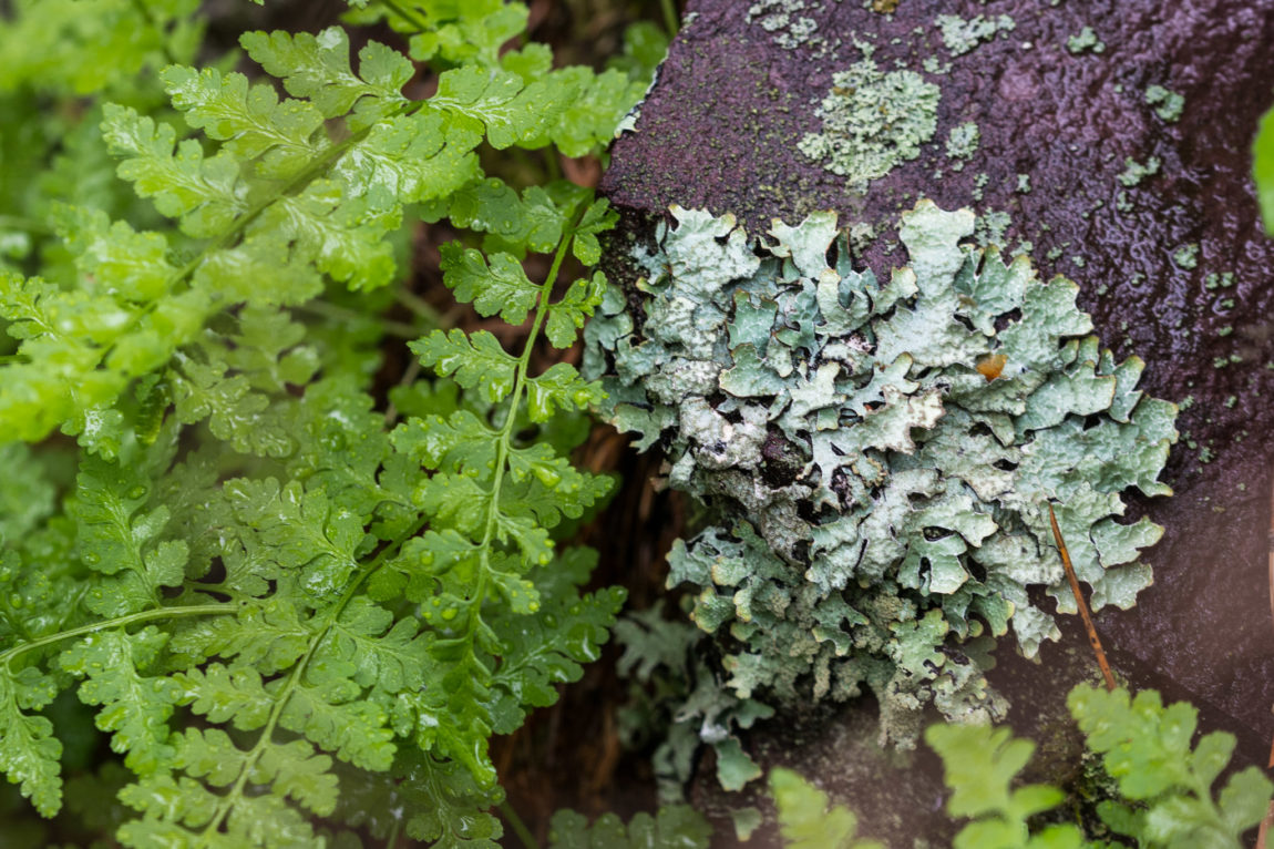 Rock to lichen to plant