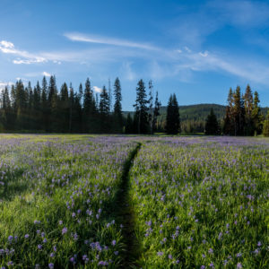 Trail through Packer Meadows