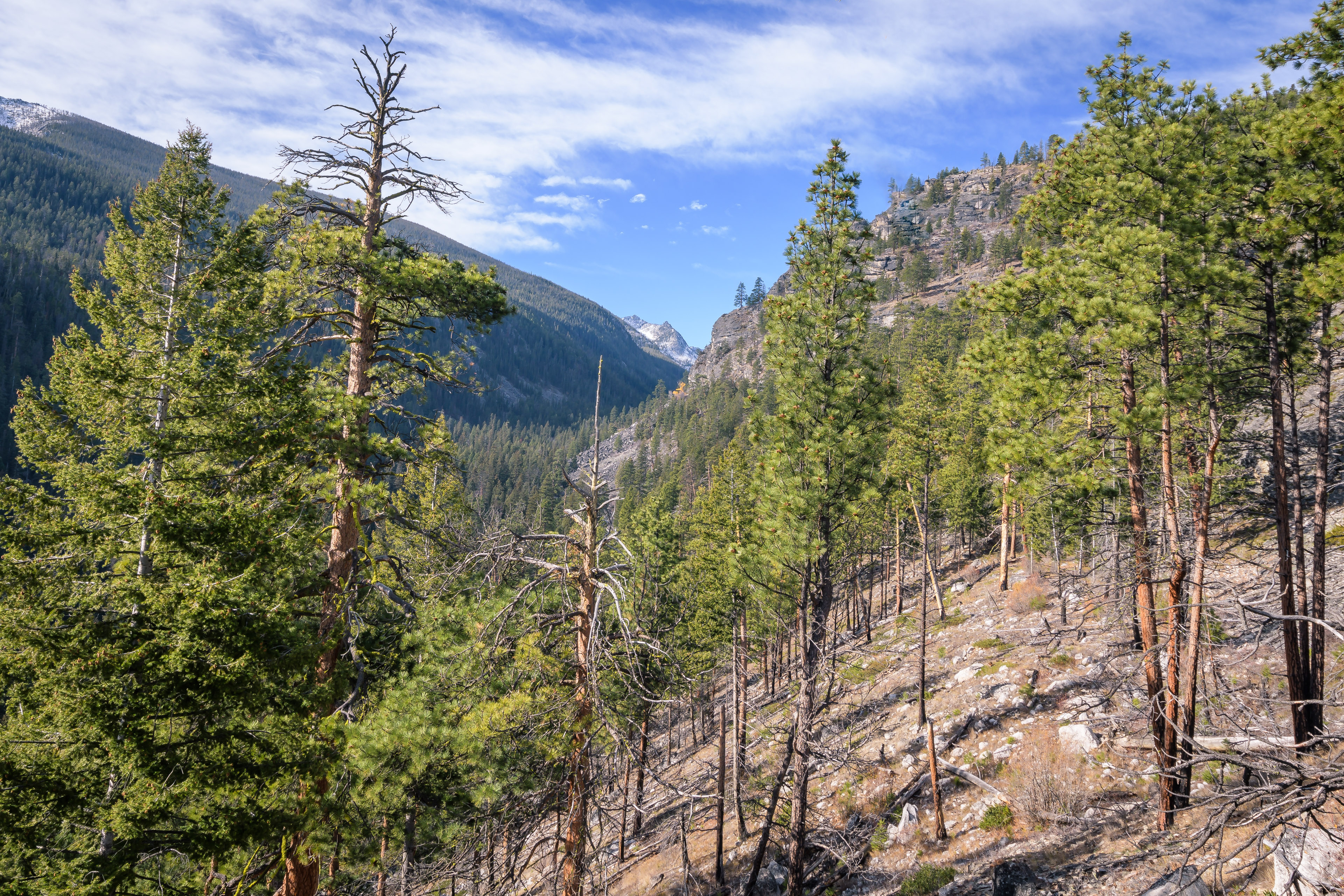 Looking up the Canyon Creek drainage
