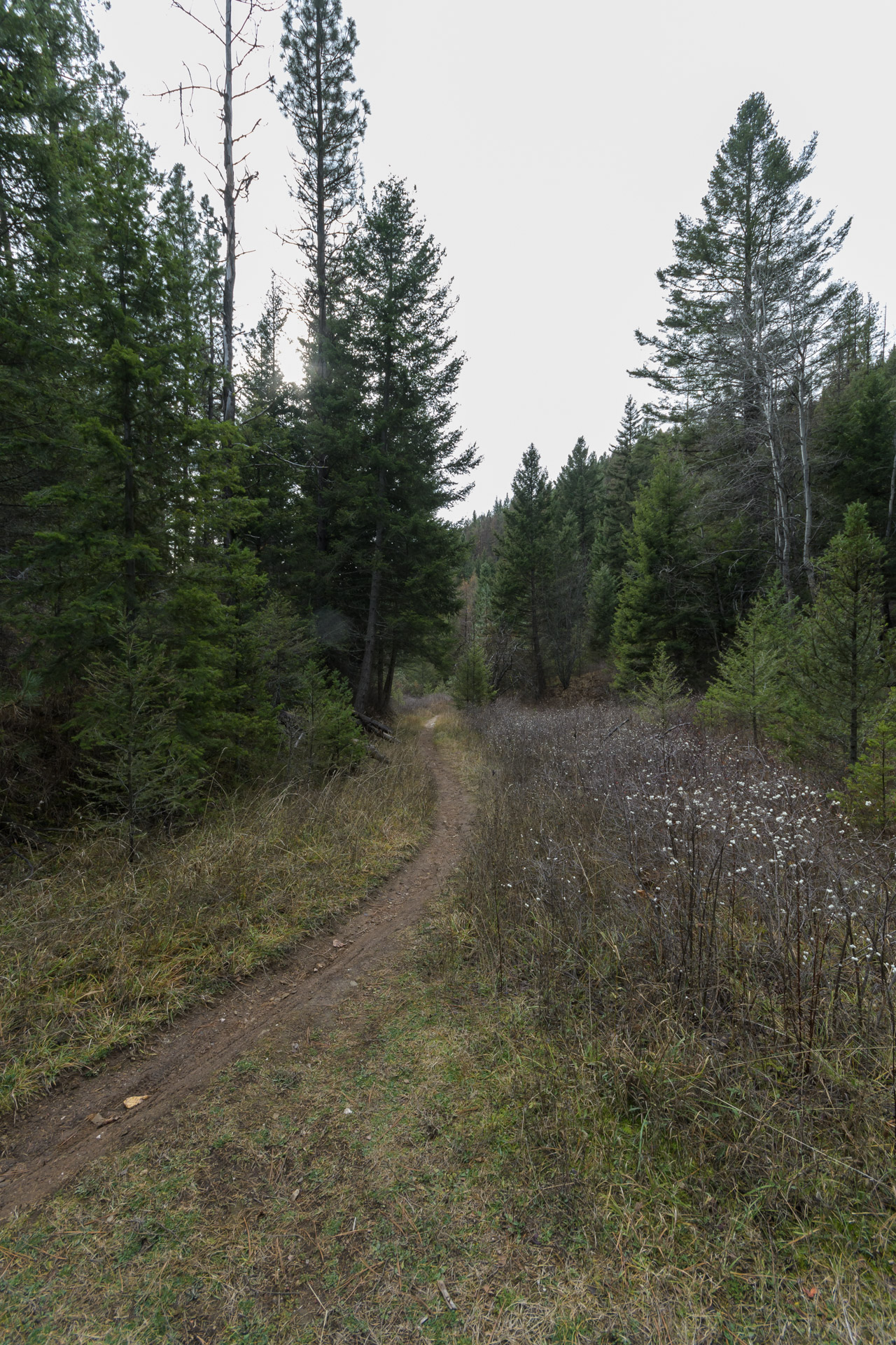 The trail to Curry Cabin