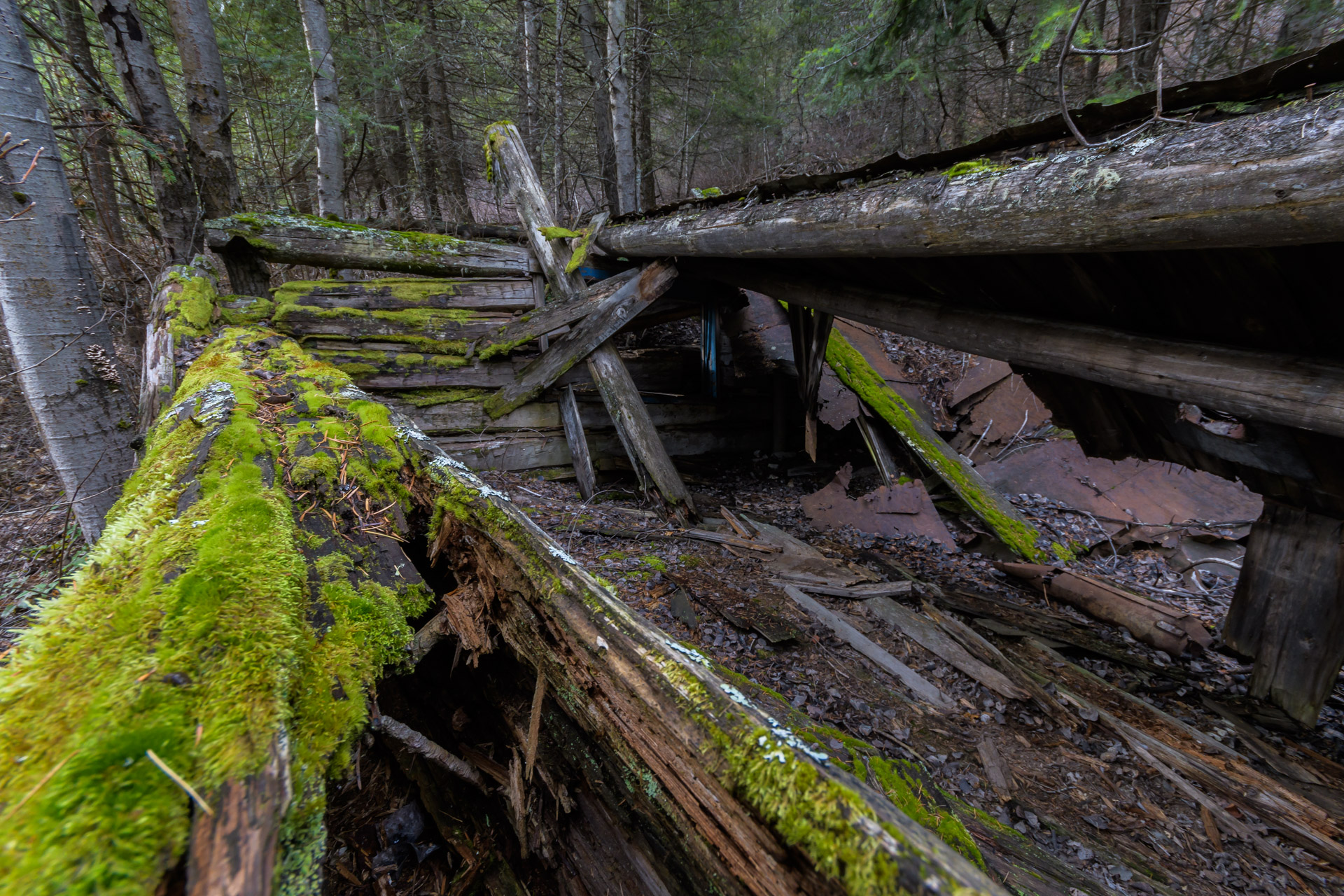The roof of Curry Cabin has long since caved in