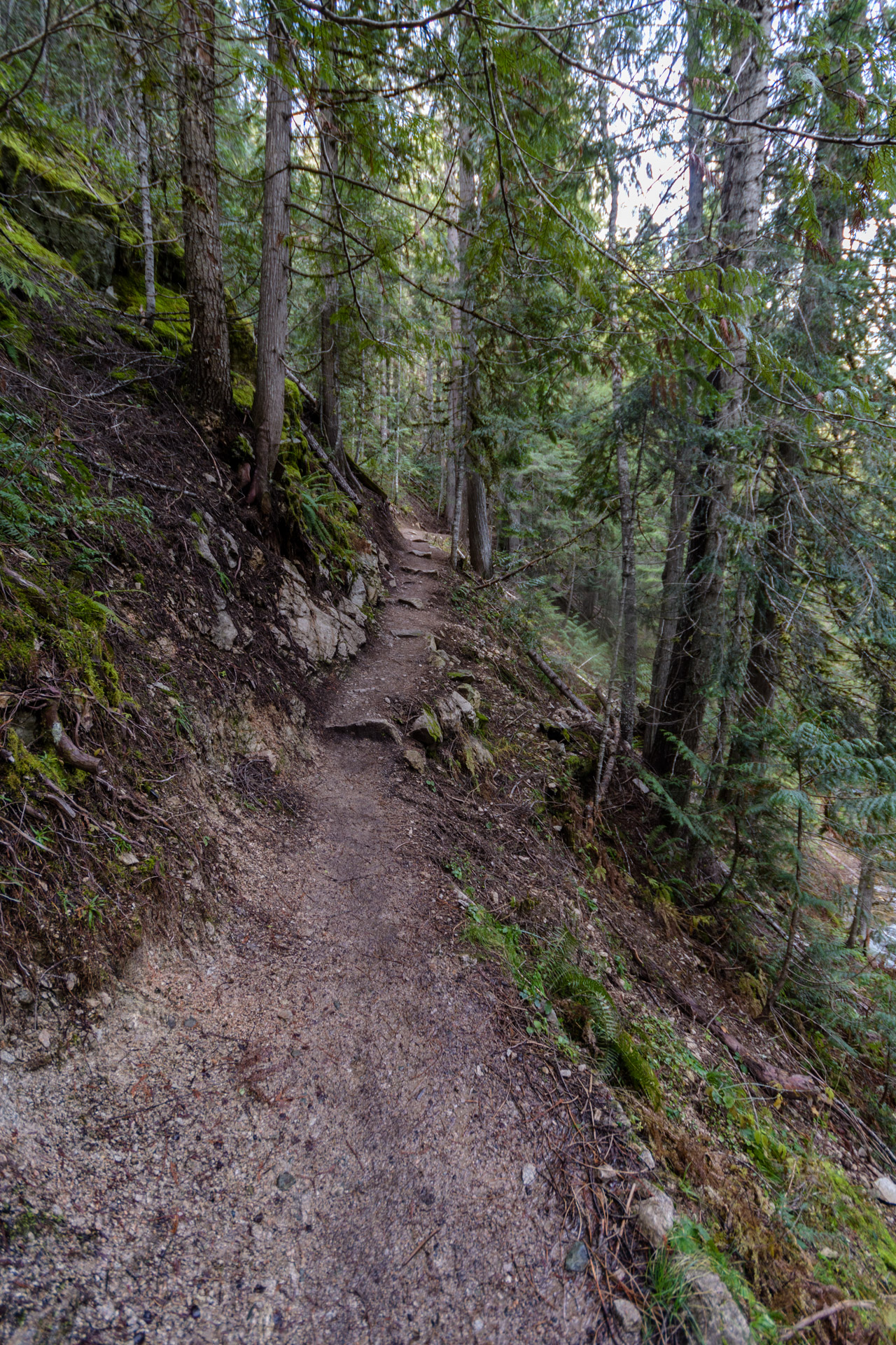 The trail to Weir Hot Springs is slightly up and slightly short