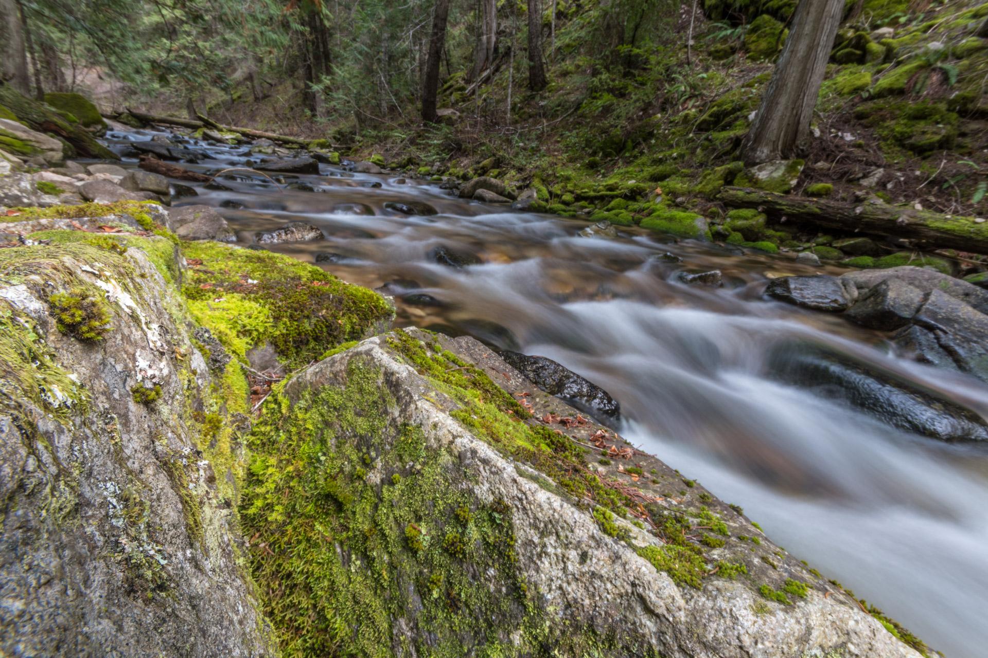 Weir Creek cascades under the cedars and firs