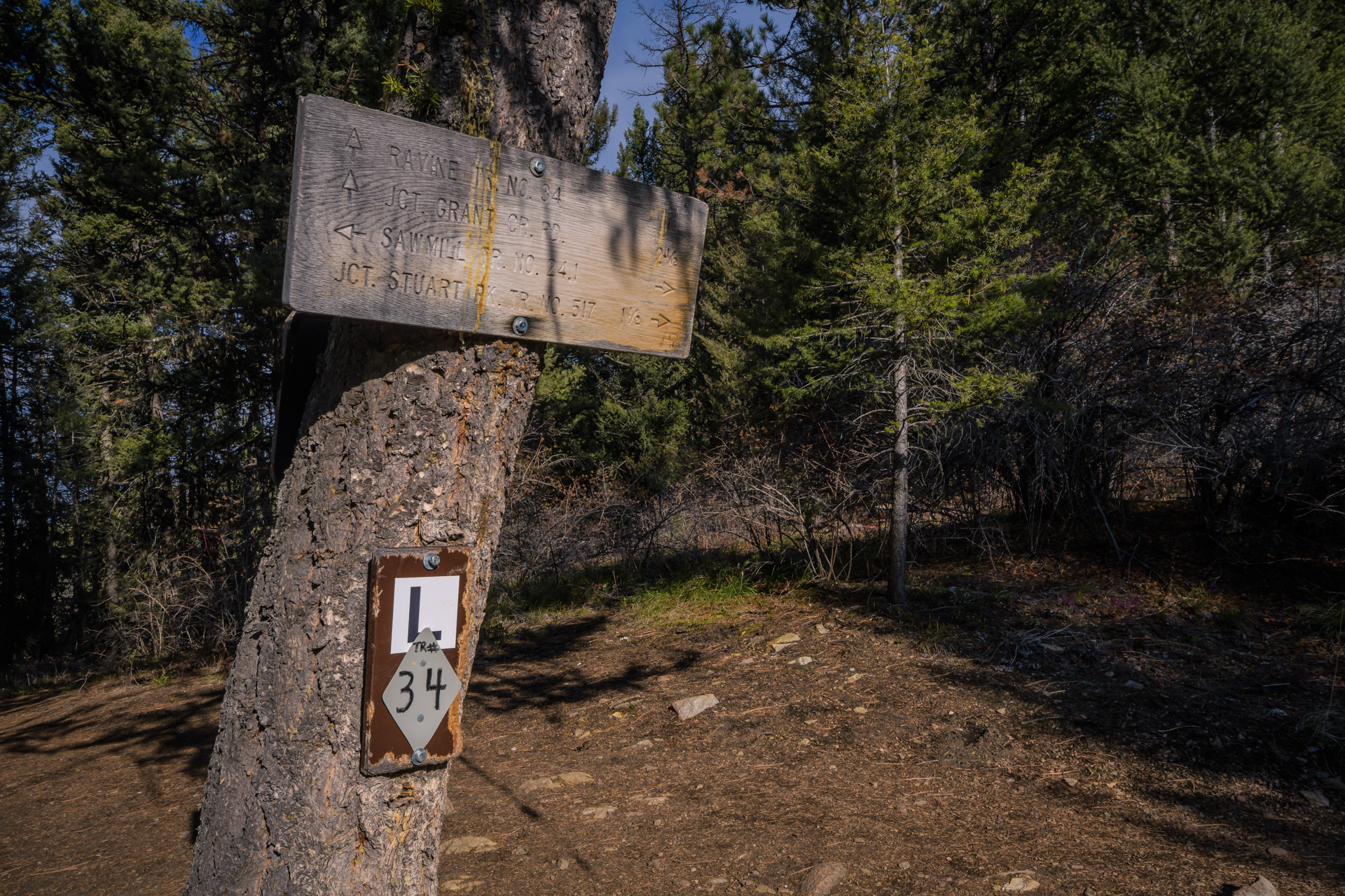 The junction with the Ravine Trail which comes out of Grant Creek