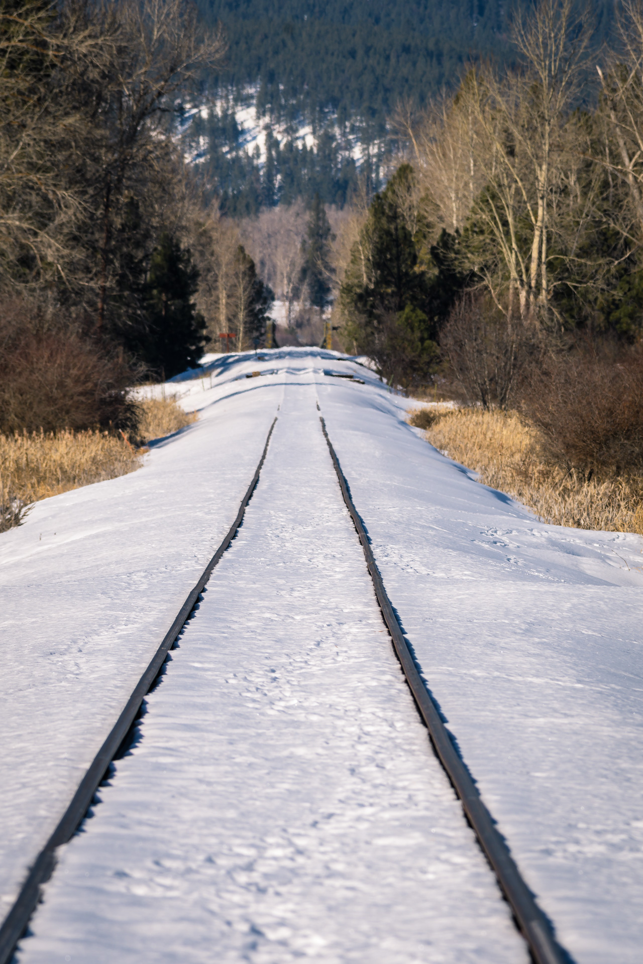Railroad tracks leading north