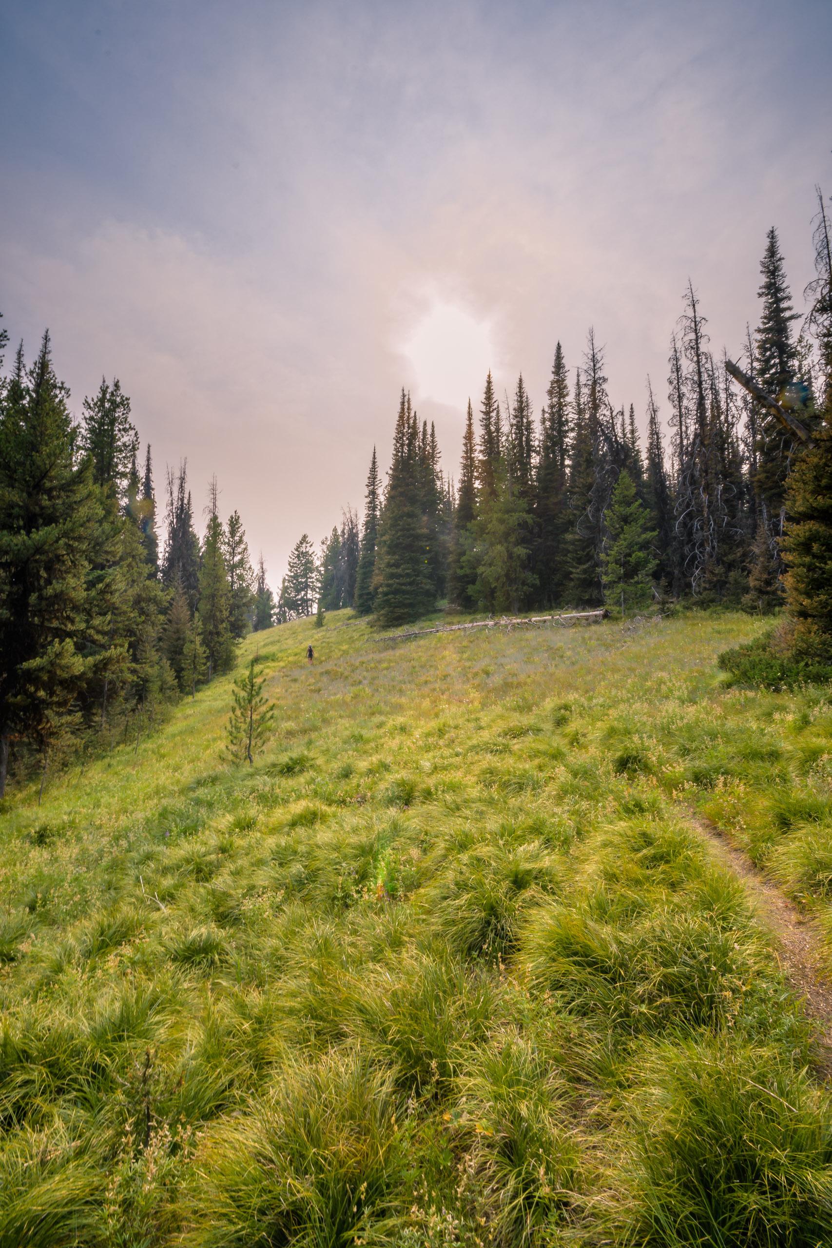 Vida approaching the timbered ridge
