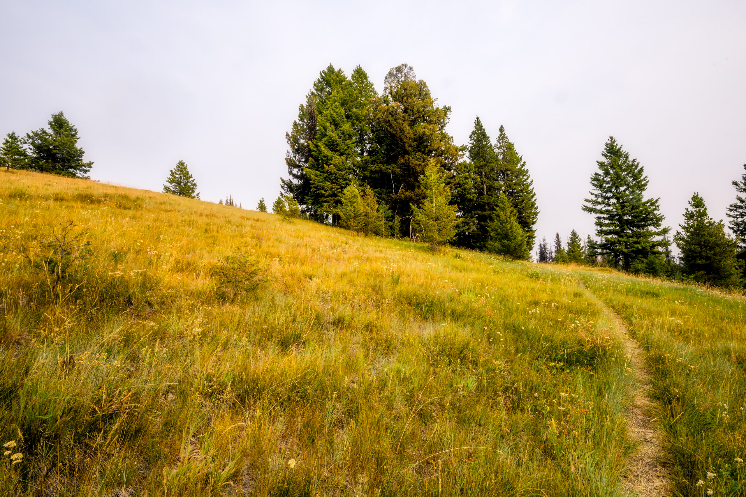 Loved hiking through this meadow